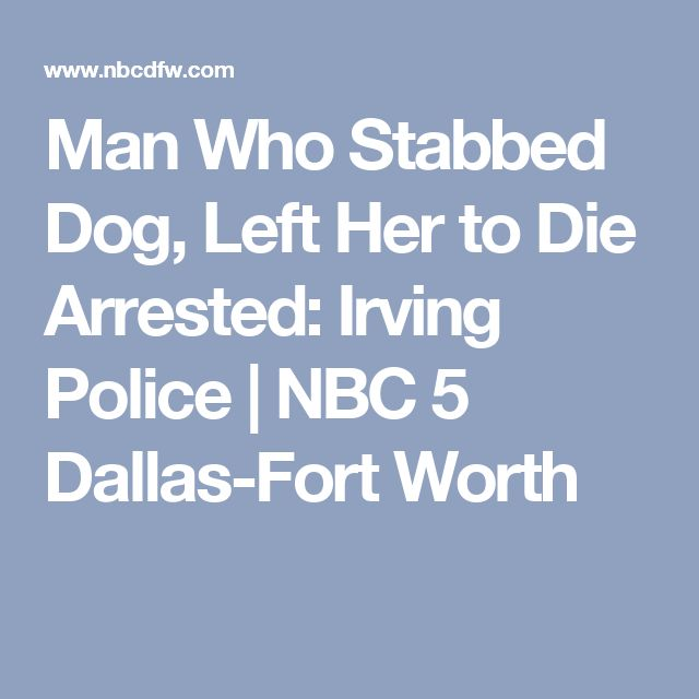 Man Who Stabbed Dog, Left Her to Die Arrested: Irving Police  | NBC 5 Dallas-Fort Worth