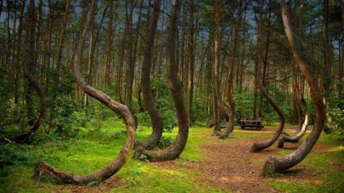 Crooked Forest, Western Poland