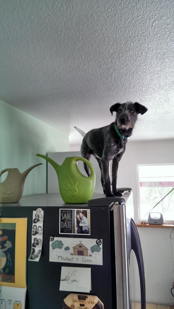 Staff Pets! Otto