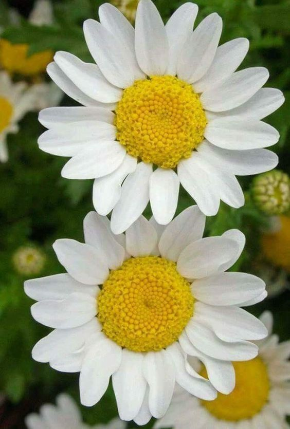 All White Flowers Are Beautiful And With Meanings Of Their Own So