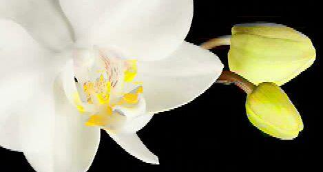 The Twin Flame Journey | Atualizações de informações e informações sobre o amor sagrado