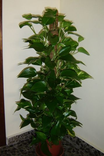 Перекись водорода для домашних растений.. Обсуждение на LiveInternet - Российский Сервис Онлайн-Дневников
