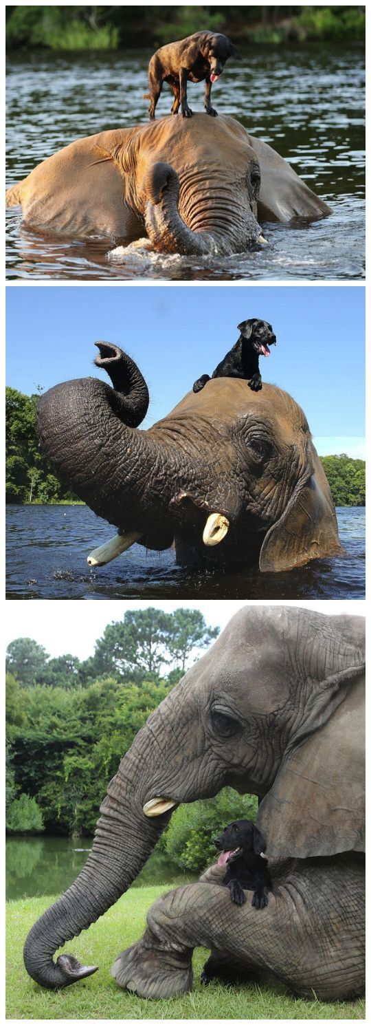It's so sweet how the elephant helped the dog crossing the water, they must have a great relationship!