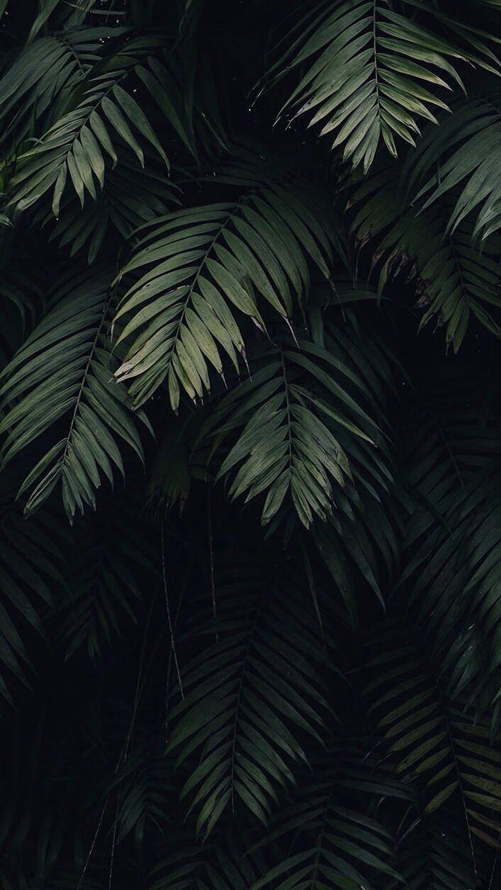 Tropical Leaves Preppy Wallpaper Iphone Wallpaper 10 Tropical Wallpaper 349,000+ vectors, stock photos & psd files. tropical leaves preppy wallpaper