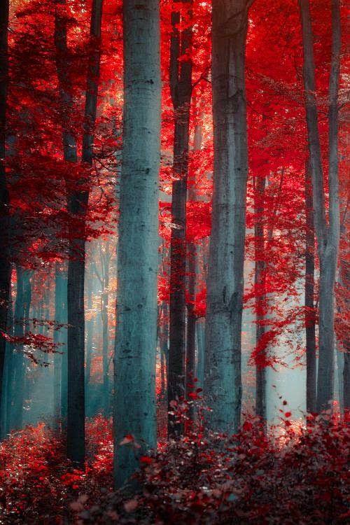 Dat Nature: Autumn fall trees forest desktop wallpaper