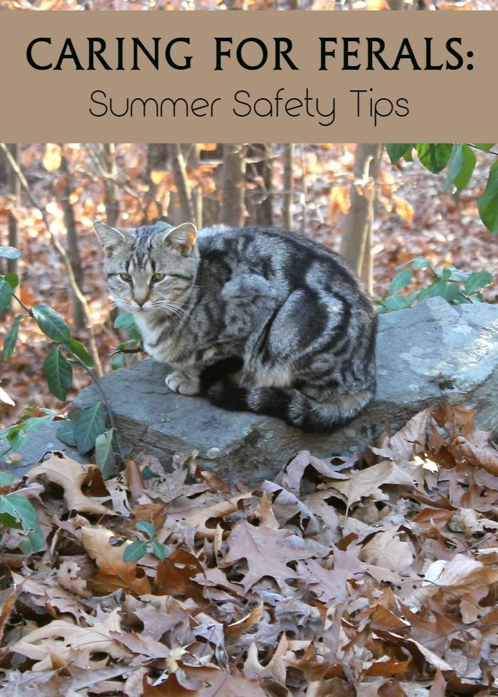 Caring for feral cats in your neighborhood? Check out these important tips to help keep them safe during the blazing hot summer months! http://www.prettyopinionated.com/2016/04/summer-safety-for-feral-cats/