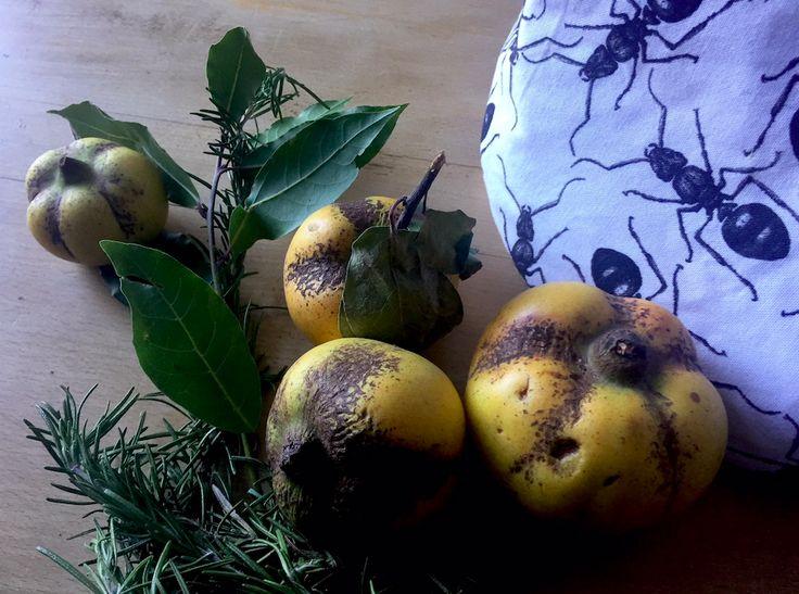 Quittenäpfel und Rosmarin zum Erntedank. Dazu ein Stoffkorb mit grafischen Ameisen. Wunderbare Herbst Dekoration. #deco #autumn #table #color #organic #organiccotton #illustration #art