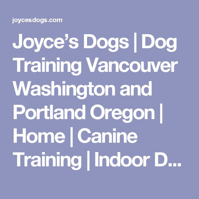 1000 Ideas About Dog Pools On Pinterest Pet Resort Dog Park And Dogs