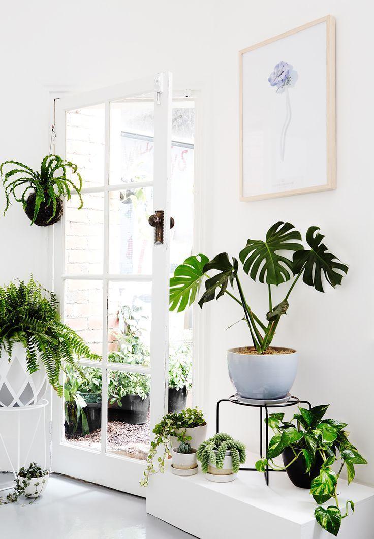 White, plants and a beautiful monstera