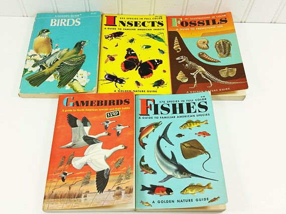 Golden Nature Guides - 1950's & 60's  North American Field Identification - Birds, Gamebirds, Fishes, Insects and Fossils. Great pocket guides for summer adventures.  offered by #naturegirl22.etsy.com