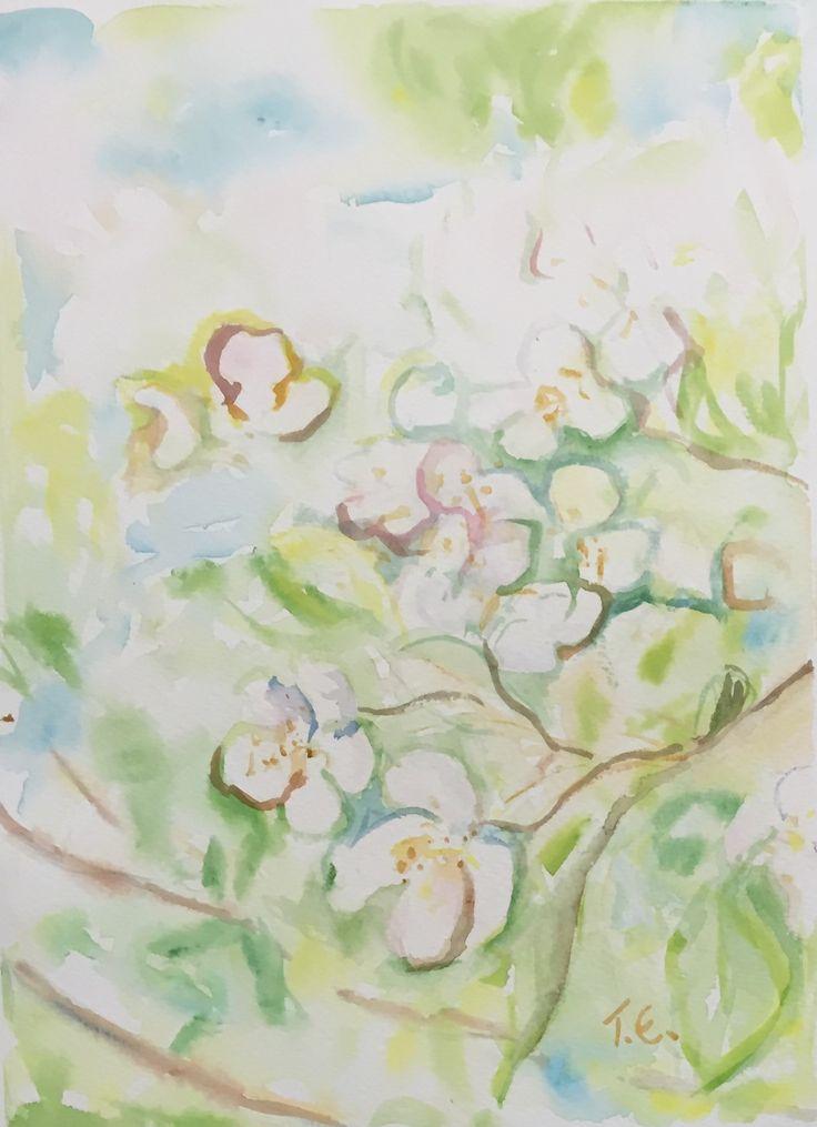 Apple Blossom - Watercolor 2015/10