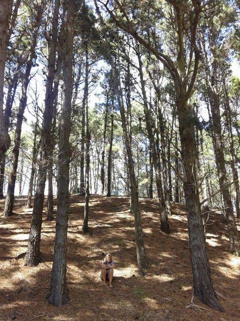 Bosque de Mar de las Pampas, cortesía de Roxana