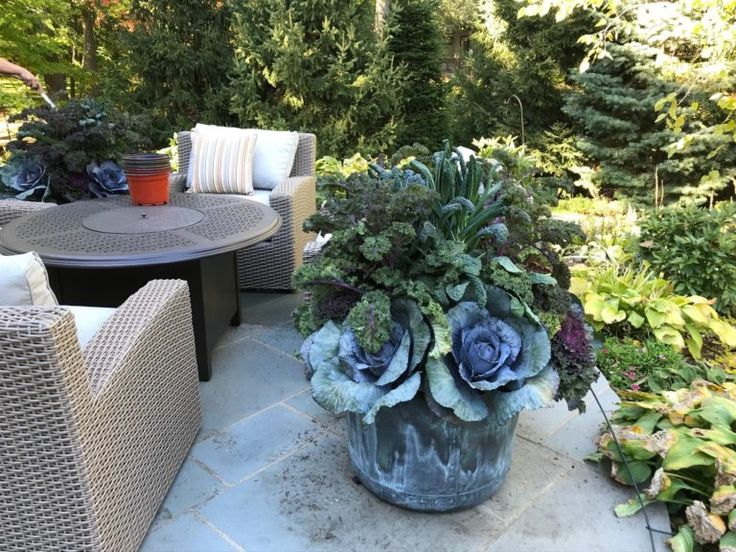 At A Glance: Recent Work | Dirt Simple - edible container garden with cabbages and kale