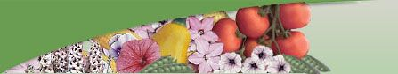 Lindenberg Seeds Limited