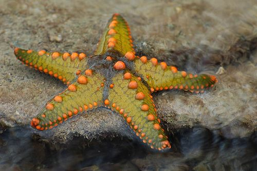 I didnt know starfish came in such pretty colors!