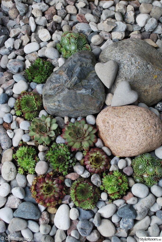 Succulenter tillsammans med stendekorationer