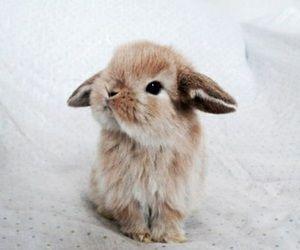 cute                                                                                                                                                                                 More