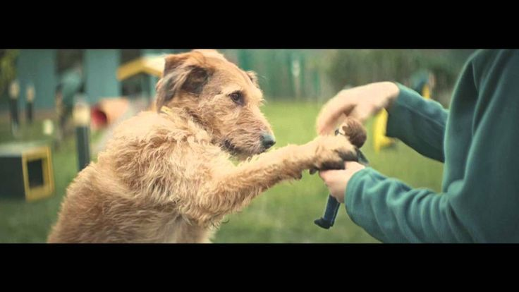 """Dogs Trust TV Ad --I only want to be with you """"The campaign is trying to raise awareness of hundreds of dogs at Dogs Trust's 20 rehoming centres around the country by showing just how important a new owner is to a Dogs Trust dog waiting for their special someone."""""""