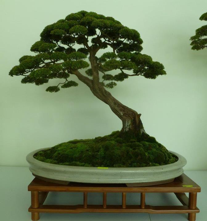 The unique of bonsai show 2012 15 mar 15apr putrajaya for Unique bonsai trees