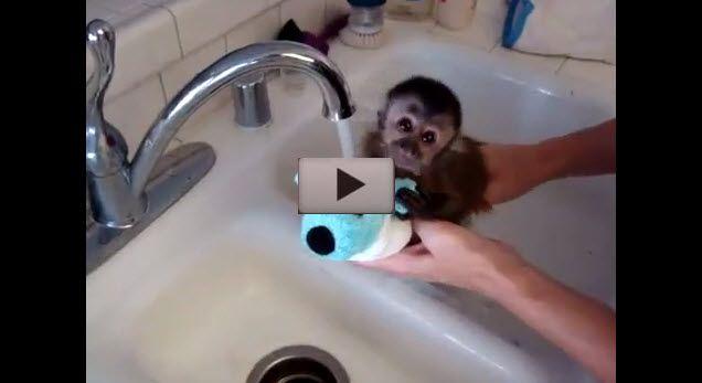 C'est l'heure du bain petit singe !