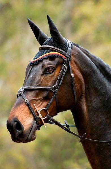 fantastic bay coloration! beautiful eyes! www.thewarmbloodhorse.com
