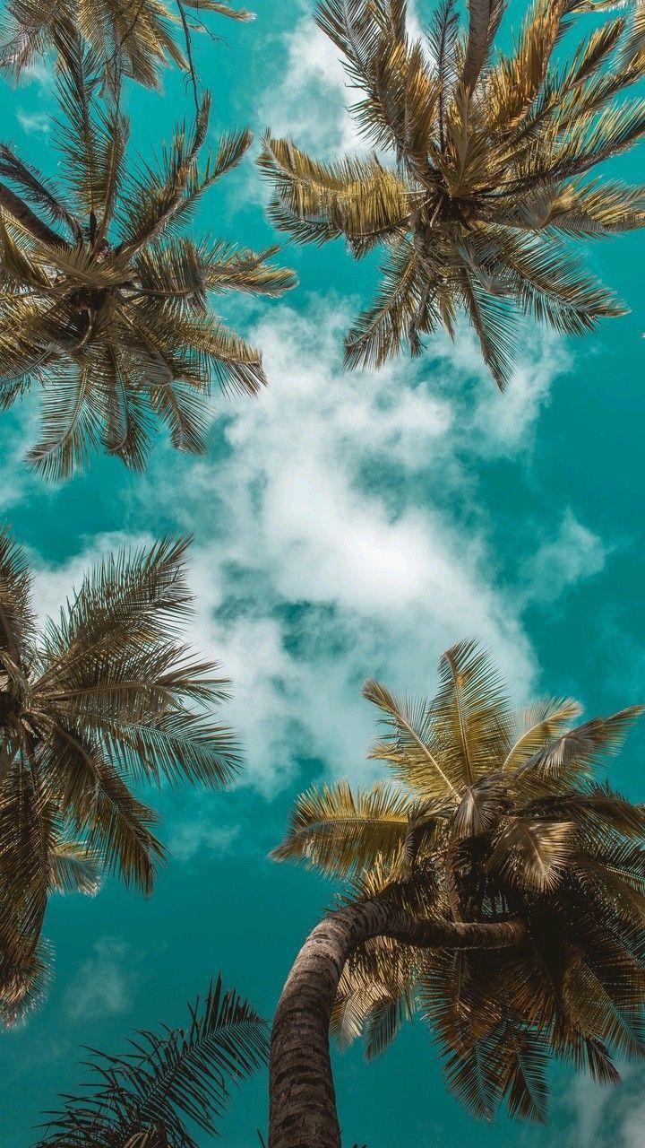 Wallpaper Beach Trees Wallpaper De Coqueiros Beach