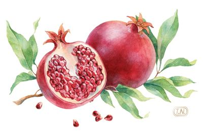 pomegranate patterns by Natalia Tyulkina, via Behance