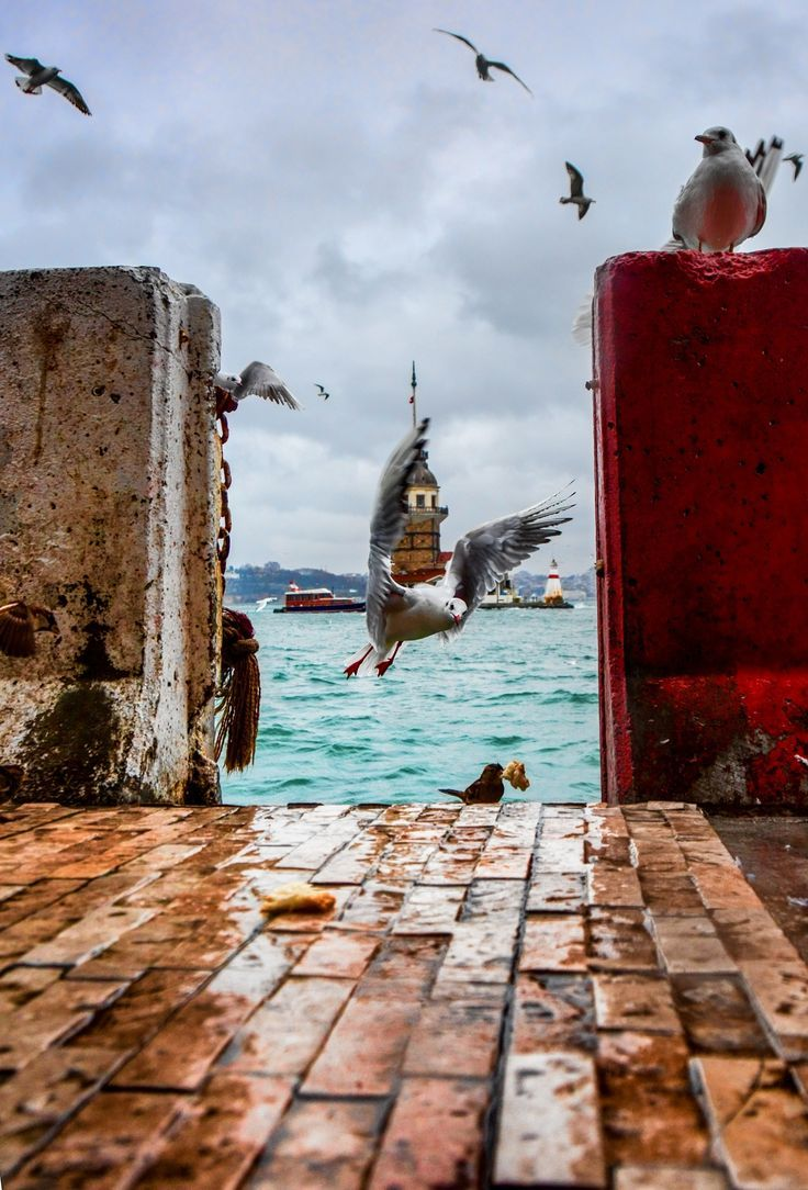 Bird at Golden Horn, Istambul, Turkey