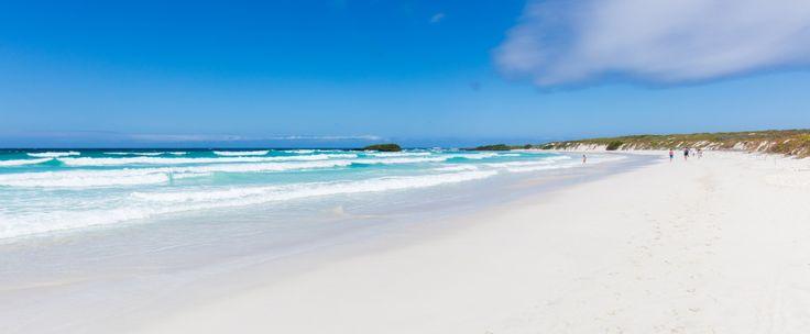 Tortuga Bay, Puerto Ayora, Santa Cruz Island, Galapagos Islands, Ecuador