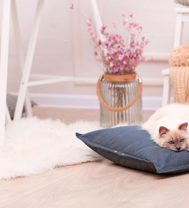 17 mejores ideas sobre alfombra de piel de oveja en - Westwing alfombras vinilo ...