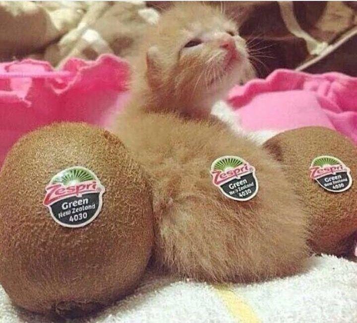 cutefunnybabyanimals: HAppy international cat... - HighlandValley
