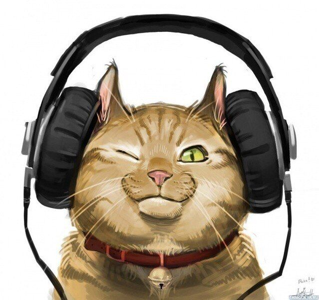 picture, illustration, color, music, listen, cat, kitty