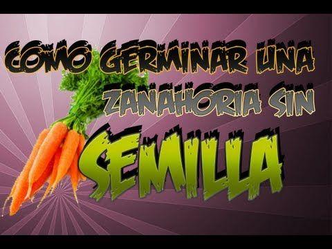 Como Germinar Zanahoria Sin Semilla || Experimento Organico || La Huertina De Toni - YouTube