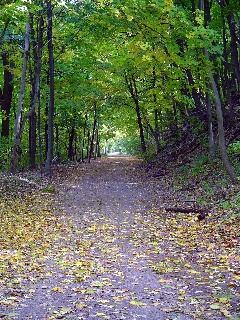 Rail Trail- Former Railway Line Along The Escarpment In Downtown Hamilton That The City Bought And Converted To a Trail For Hiking/Biking Etc.