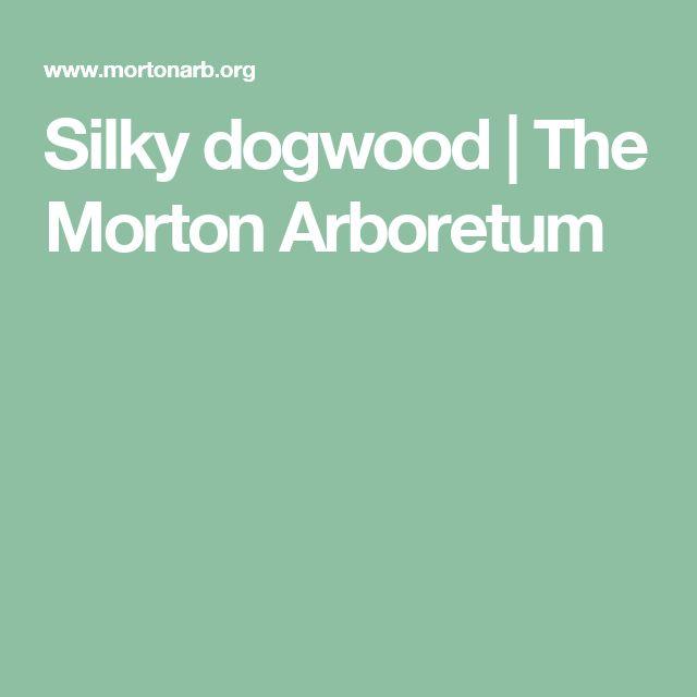 Silky dogwood | The Morton Arboretum