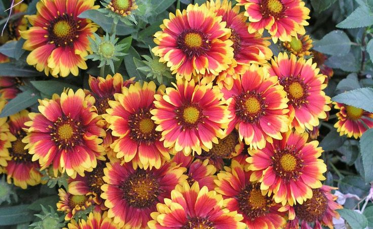 Rasen aussäen, Stauden teilen, Rosen düngen oder Zwiebelblumen pflanzen: Im September hat man im Ziergarten alle Hände voll zu tun