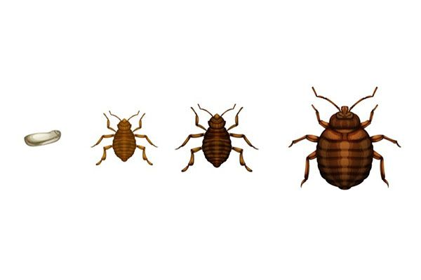 Bed Bug Spray and Other Bed Bug Treatments | While bed bugs can often be hard to spot, there are ways to fight back. Learn which bed bug traps work best and what to do once you've trapped them. #TerminixBlog