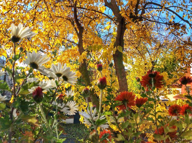 Se va el otoño