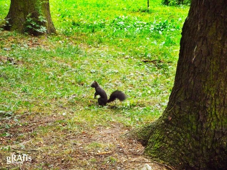 Little Squirrel, Vatra Dornei, Romania photo by Grafis Ramona