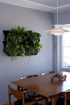Inspiring Fragrant Indoor Plants Ideas For Natural 400 x 300
