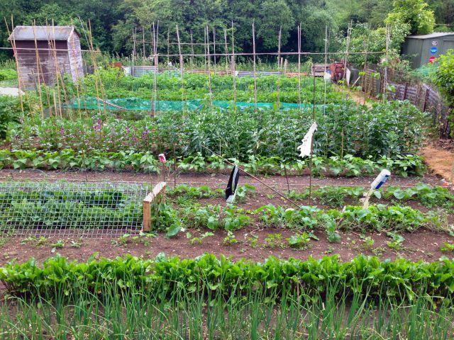 English vegetable garden beautiful england pinterest gardens english and vegetable garden - Country vegetable garden ideas ...