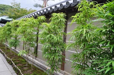 Bamboo Hedge Privacy Screens