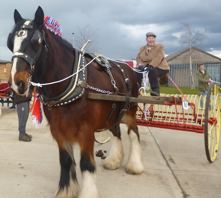 The Shire Horse Society 2013 Spring Show, East of England Showground, Peterbrough