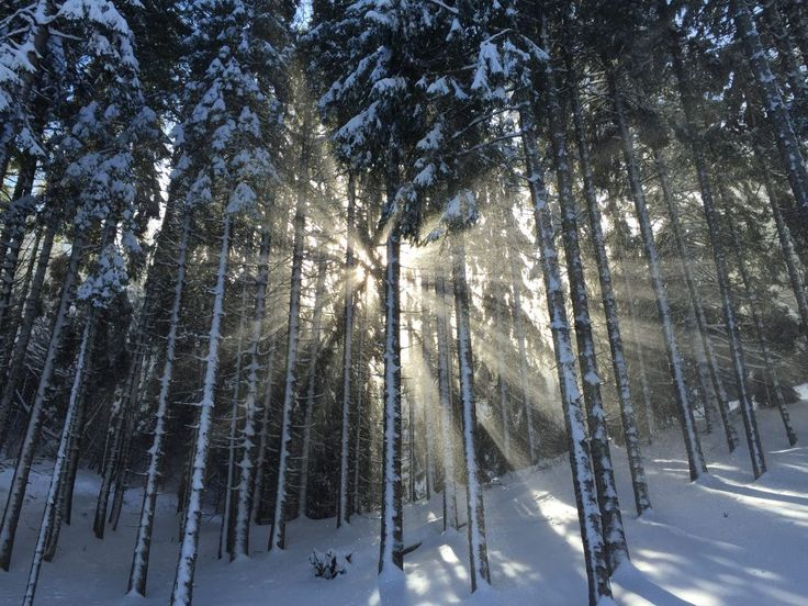 Download this free photo here www.picmelon.com #freestockphoto #freephoto #freebie /// Sun in a Snowy Forest | picmelon
