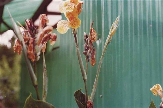 William Eggleston, Untitled, Flowers, ca. 2008.