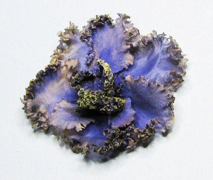 Сенполия. Высушено в микроволновой печи в вулканическом песке для купания шиншилл. 3D гербарий. Объёмный гербарий.