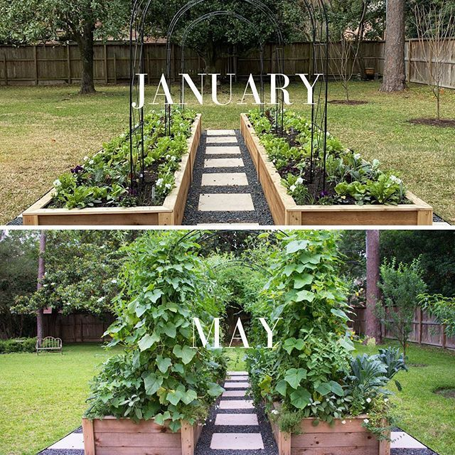 A Kitchen Garden Before And After In 2020 Kitchen Garden Plants Kitchen Garden Cottage Kitchen Design
