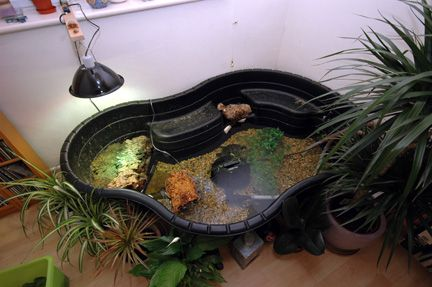 SURFACE-MOUNT PONDS FOR SLIDER AND OTHER AQUATIC TURTLES Animals ...
