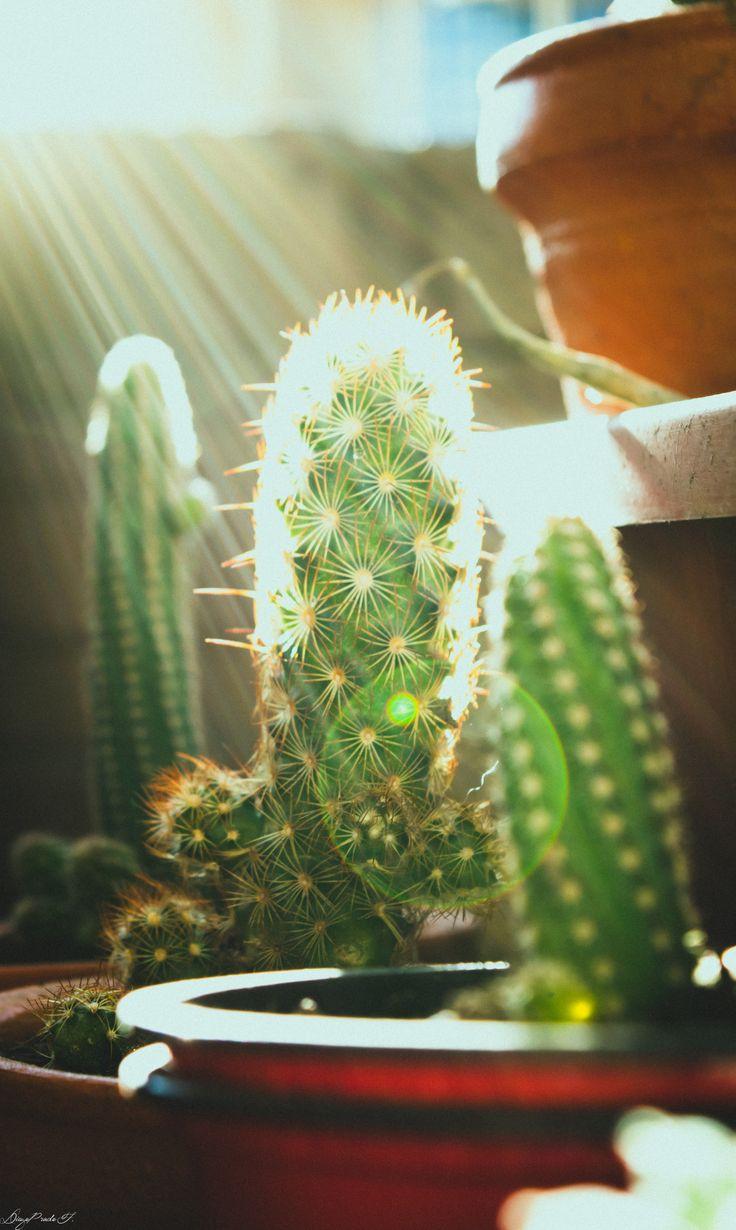 Cactus Time │Momentos Fotografía │Instagram │ HB
