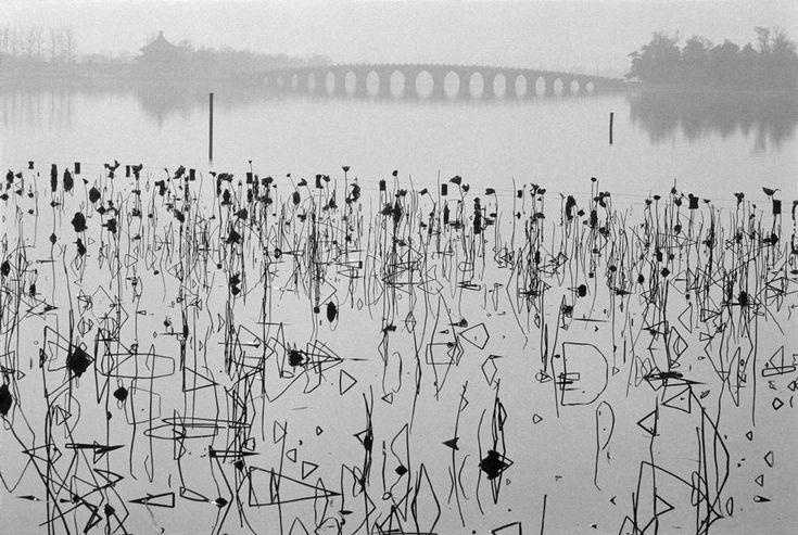 Rene Burri. CHINA. Beijing. 1964. Former Summer Palace. Dead lotus flowers on the Kunming Lake